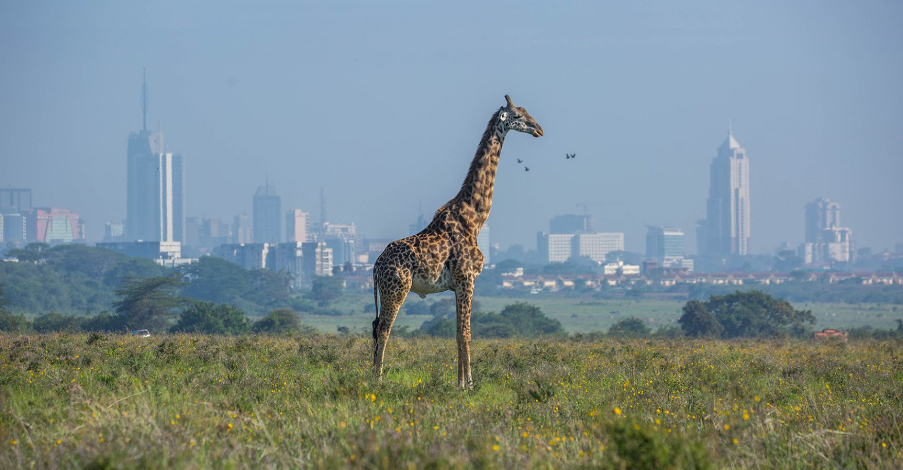 NAIROBI DAY EXCURSION KAREN AREA